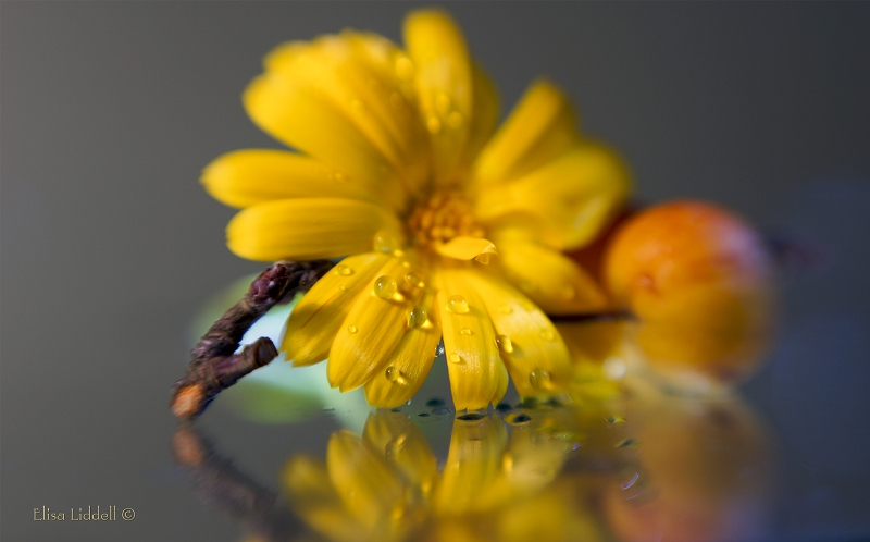 Marigold shot on glass