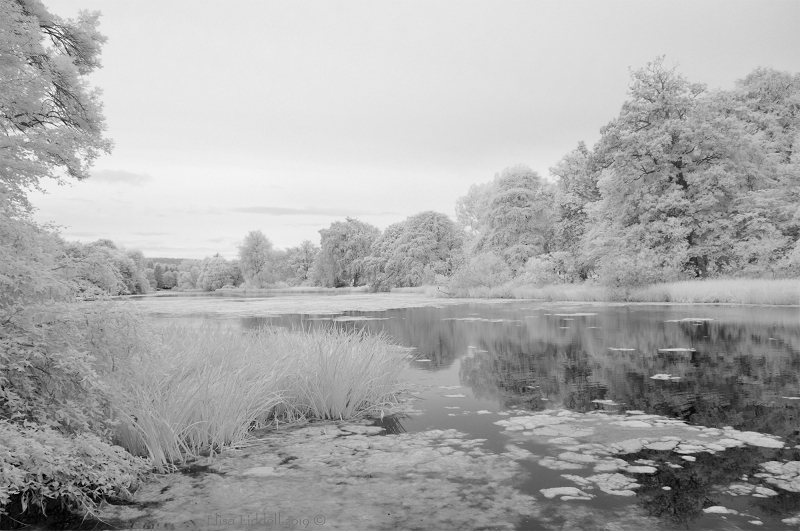 Fyvie loch shot with the Nikon D90 Infrared converted camera.