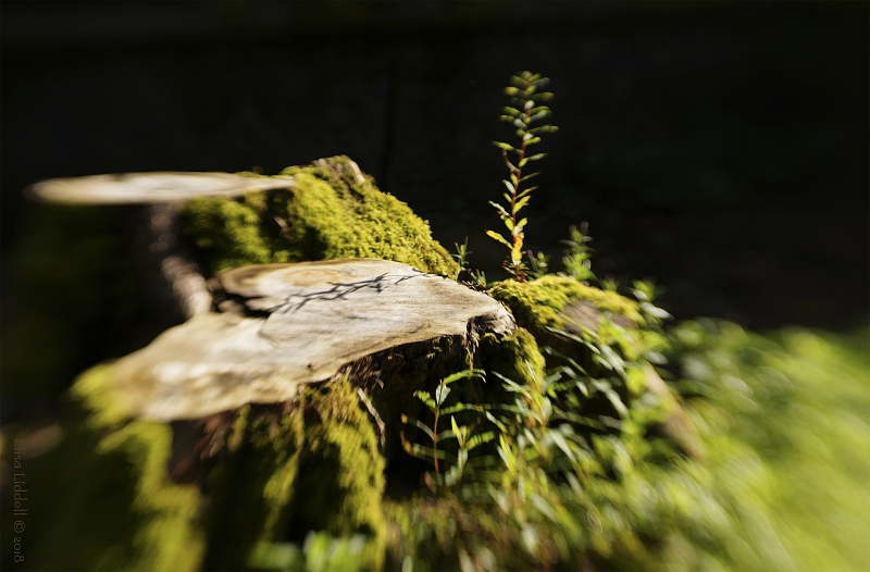 An old tree stump, caught in a shaft of sunlight.
