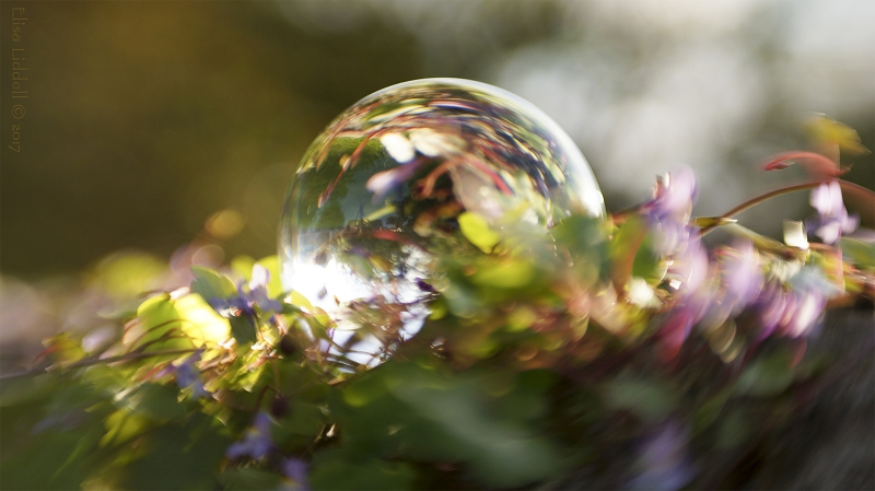 A crystal glass sphere lying among some flowers.
