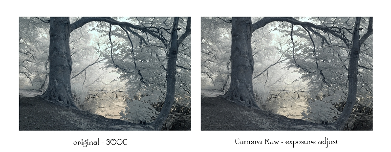 Fyvie loch through the trees. Two versions