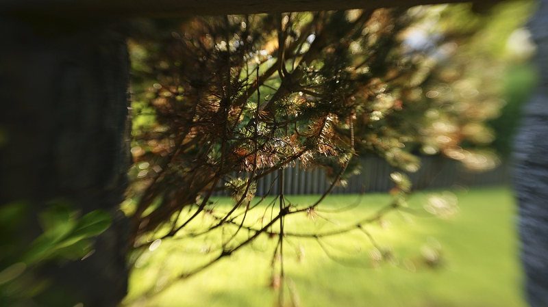 Looking through a screen of branches into the garden