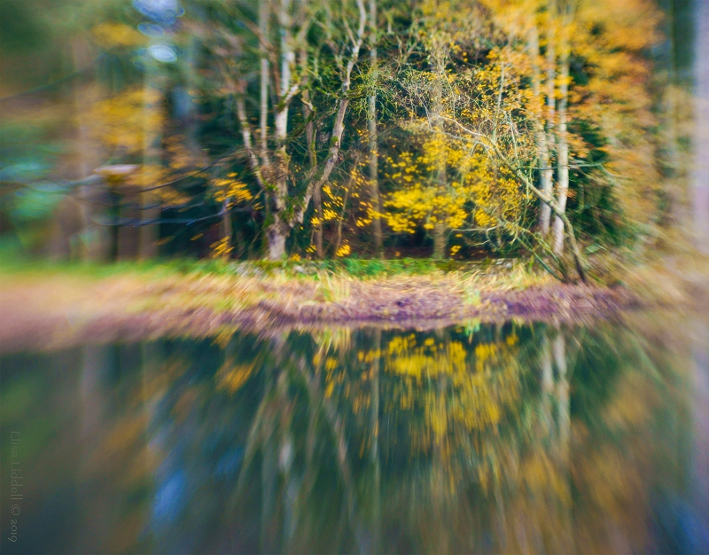 Lensbaby Double Glass trees