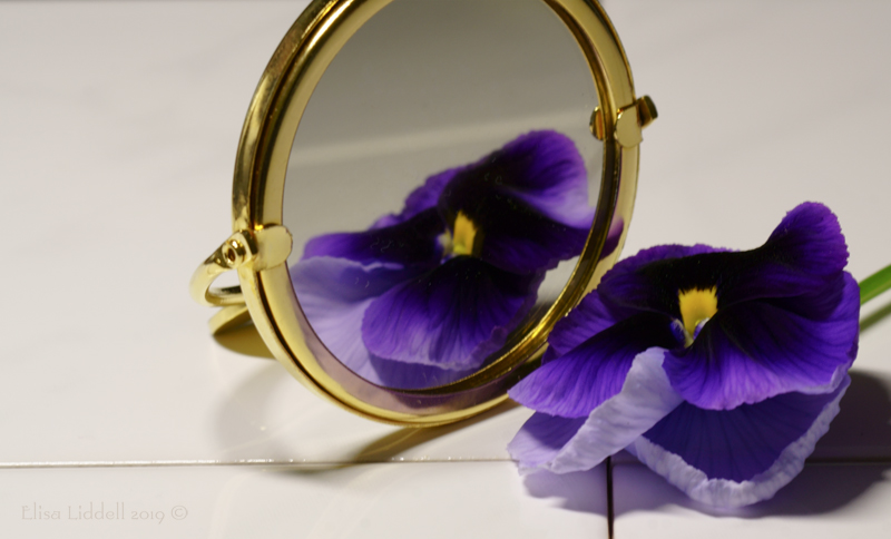 Purple pansy with mirror