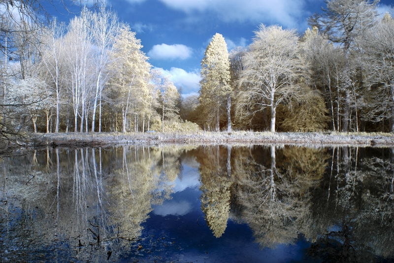 trees reflected IR faux