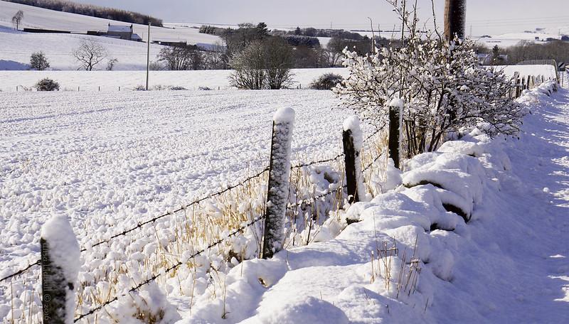 sunny snowy fence