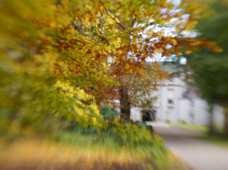 Lensbaby autumn