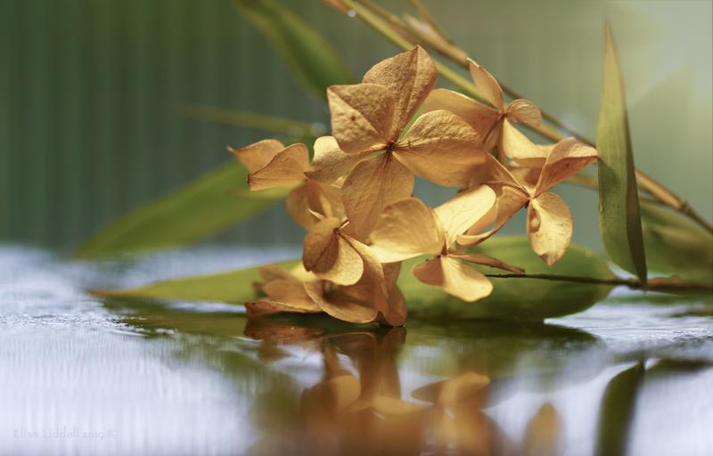 hydrangea and bamboo