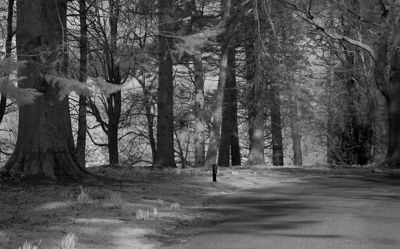 March bare trees in infrared