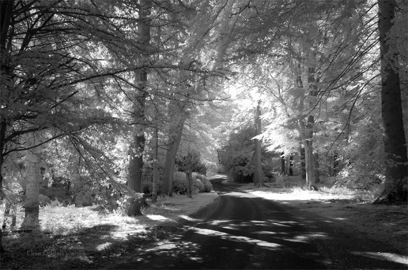 Fyvie castle walk in infrared