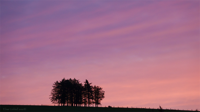Sunrise and the tree line