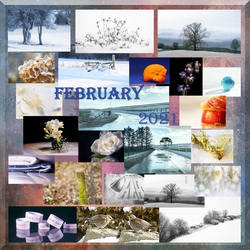 collage for February 2021