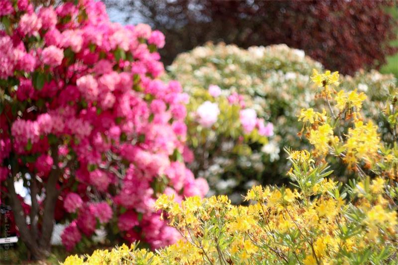 June garden colours