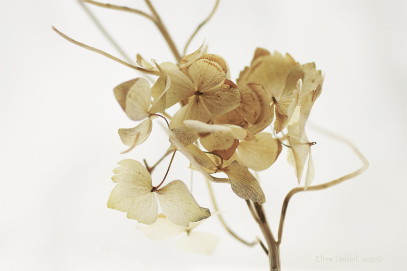 close up of dried twigs and petals