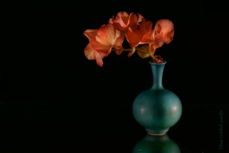 begonia flowers in a vase